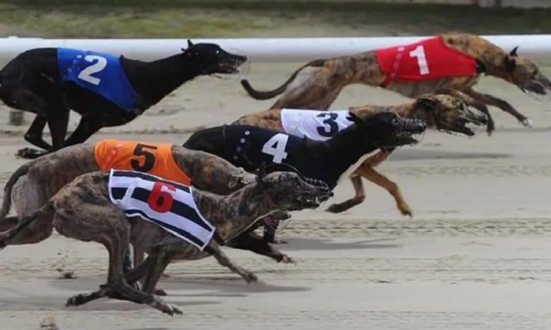 เกมแข่งสุนัข - วิธีเดิมพันแข่งสุนัขออนไลน์ที่ W88 house