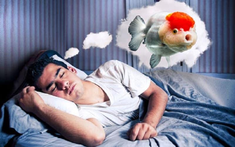 ความฝันเกี่ยวกับปลาคืออะไร  ตัวเลขมีความถูกต้องที่สุด [NEW]