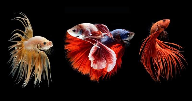 ความฝันเกี่ยวกับปลาคืออะไร?  ตัวเลขมีความถูกต้องที่สุด [NEW]