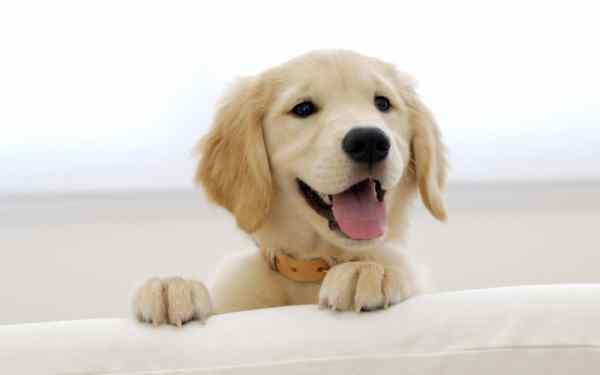 ฝันว่าสุนัขไล่ตามคุณหมายความว่าอย่างไร?  ลางบอกเหตุอะไร?